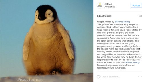 National Geographic Instagram feed